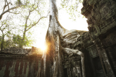 Cambodia, Angkor, Ta Prohm temple, Tomb Raider film location - REAF00189