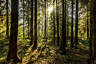 Czechia, Hradec Kralove, forest in Giant Mountains National Park - CSTF01246