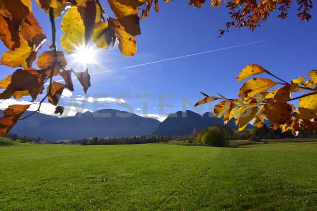 Germany, Allgaeu, meadow and autumn leaves at backlight - FDF00223 - Kontrastlicht/Westend61