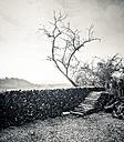 Stacked firewood - SKAF00052