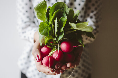 Woman's hands holding bunch of red radishes - GIOF01930