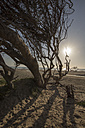 USA, California, dead tree on Pismo Beach at sunset - LMF00686