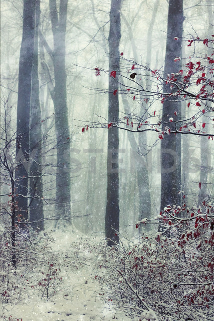 Germany, Wuppertal, winter forest, textured photography - DWIF00827