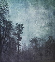 Germany, Wuppertal, forest at hazy dawn, textured photography - DWIF00830