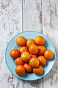 Tangerines on blue plate on wooden background - CSF27940