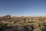 USA, California, Joshua Tree National Park, desert - LMF00710
