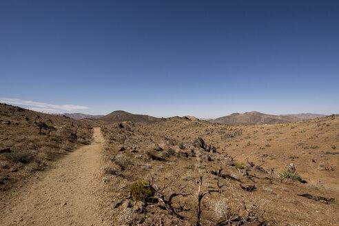USA, California, desert - LMF00713