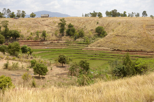Madagascar, Bevato, rice fields - FLKF00746