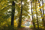 Germany, Bavaria, Bernried, forest path in autumn - SIEF07322