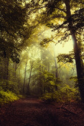 Germany, Wuppertal, forest path - DWIF00837
