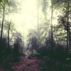 Germany, Wuppertal, forest glade in backlight - DWIF00843
