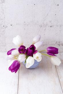Tulip in a vase - MYF01884