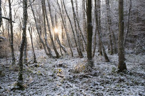 Germany, Bavaria, Geretsried, snow in alluvial forest at sunrise - SIEF07336