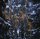Norway, Telemark, mountain Gaustatoppen in winter - DSGF01540
