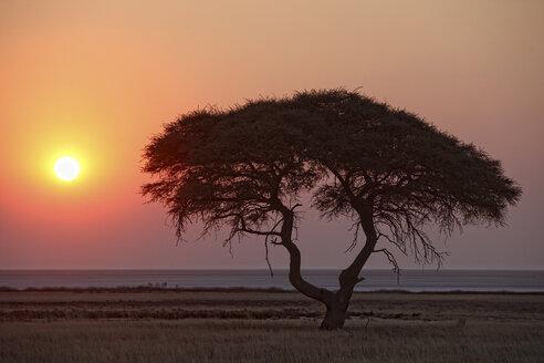 Namibia, Etosha National Park, sunset - DSGF01577