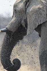 Namibia, Etosha National Park, elephant at a water hole - DSGF01589