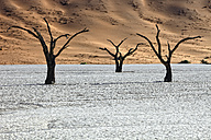 Namibia, Namib-Naukluft Park, dead trees in Dead Vlei - DSGF01601