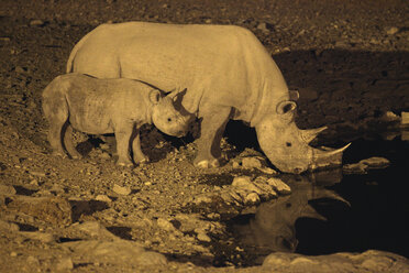 Namibia, two White Rhinoceroses at a water hole at night - DSGF01607