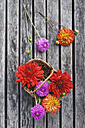 Wickerbasket of colourful dahlia blossoms on wood - GWF05023