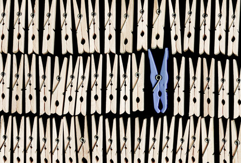 Blue clothes peg between wooden clothes pegs - CMF00661