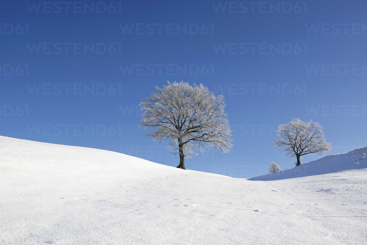 Germany, Pfaffenwinkel, frost-covered trees at winter landscape - LHF00519 - Hans Lippert/Westend61