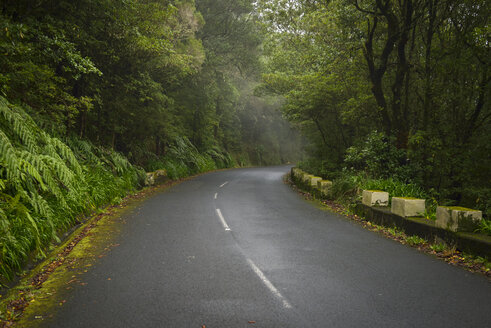 Portugal, Madeira, Mountain road - RJF00676