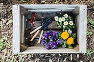Flowers and gardening tools in a crate in garden - JRFF01258
