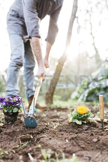 Man planting flowers in his garden - JRFF01273