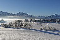 Germany, Bavaria, Illasberg and Forggensee in winter - LBF01585