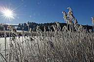 Germany, Bavaria, Illasberg, shore grass at Forggensee in winter - LBF01588