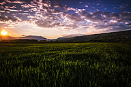 Italy, rural landscape at sunset - SIPF01458