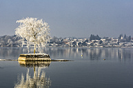 Germany, Bavaria, single tree on stone island in Chiemsee in winter - THAF01901