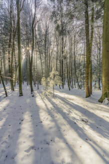 Germany, Bavaria, winter forest near Chiemsee - THAF01907