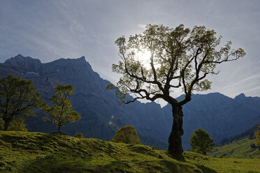 Austria, Tyrol, trees in front of Karwendel Mountains in autumn - LBF01595