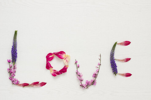 Petals shaping the word 'Love' on white ground - CMF00669
