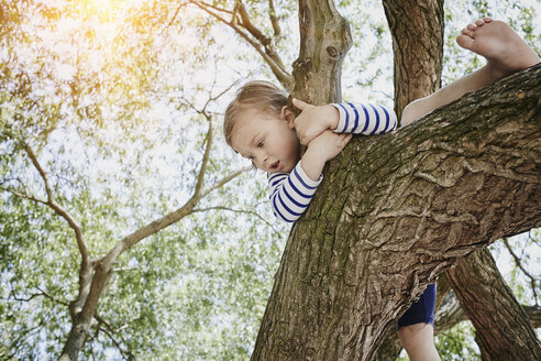 Girl climbing on a tree - RORF00688
