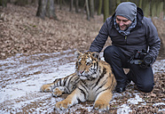 Photographer stroking young Siberian tiger in forest - PAF01759