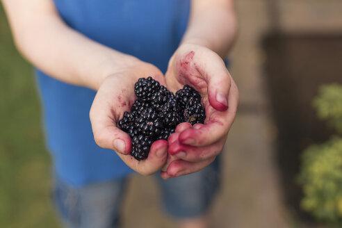 Blackberries in boy's hands - NMSF00012