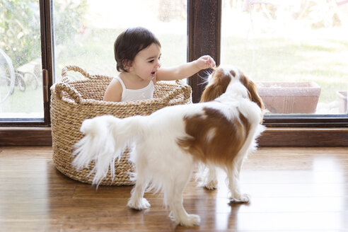 Toddler girl sitting in a basket in front of terrace door playing with the dog - LITF00560