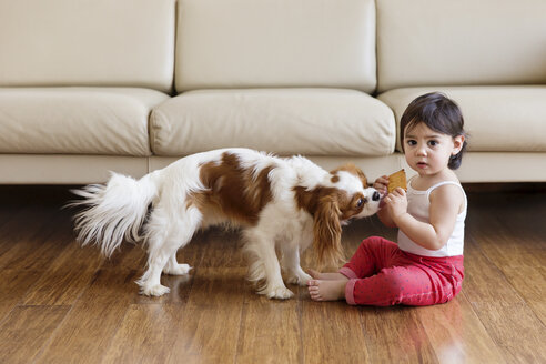 Toddler girl sitting on wooden floor in the living room holding cookie - LITF00569