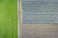 Asparagus and lettuce fields, aerial view - MMAF00061