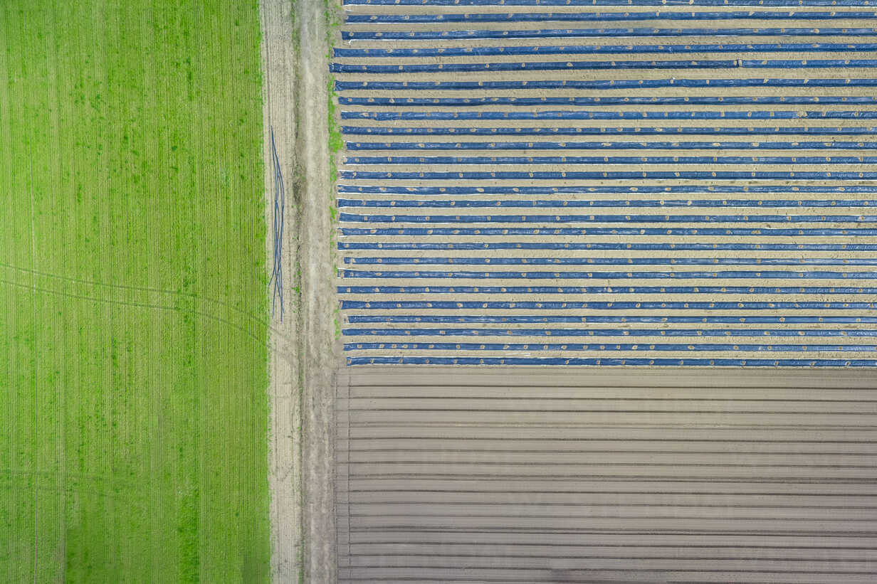Asparagus and lettuce fields, aerial view - MMAF00061 - Michael Malorny/Westend61