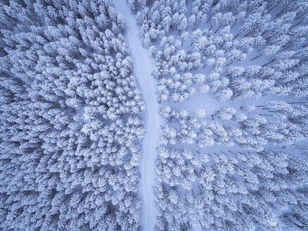 Austria, Gosau, aerial view of road through coniferous forest in winter - STCF00288