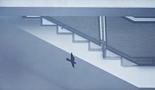 Staircase and bird on windowpane - EJWF00848