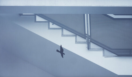 Staircase and bird on windowpane - EJWF00848