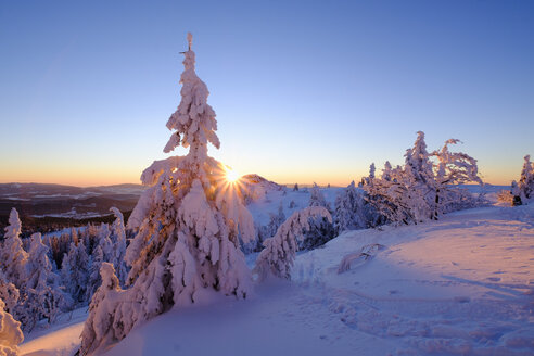 Germany, Bavaria, Bavarian Forest in winter, Great Arber, sunset - SIEF07373
