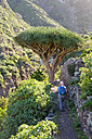 Spain, Canary islands, Tenerife, woman on hiking trail, Canary Islands Dragon Tree - SIEF07379