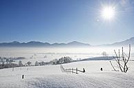 Germany, Loisach Valley near Grossweil, morning mist over Loisachmoor - LHF00522