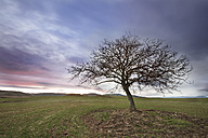 Spain, Burgos, Landscape with a lone tree at dusk - DHCF00069