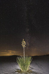 USA, New Mexico, Chihuahua Desert, White Sands National Monument, soap tree at night - FOF09215